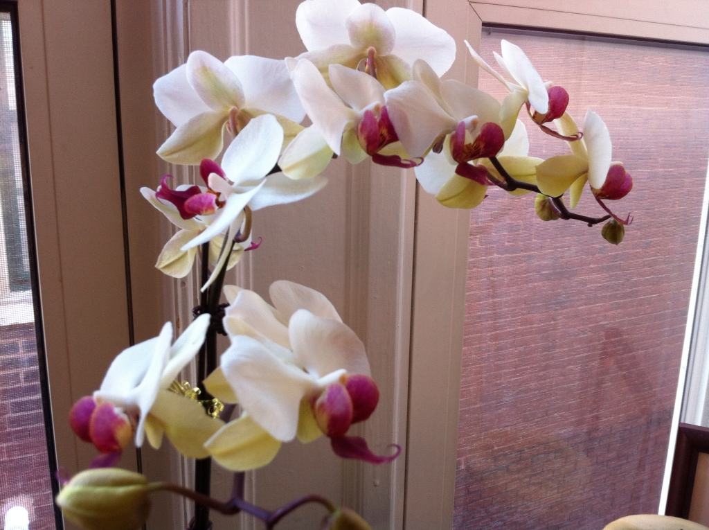 how to look after orchids melbourne