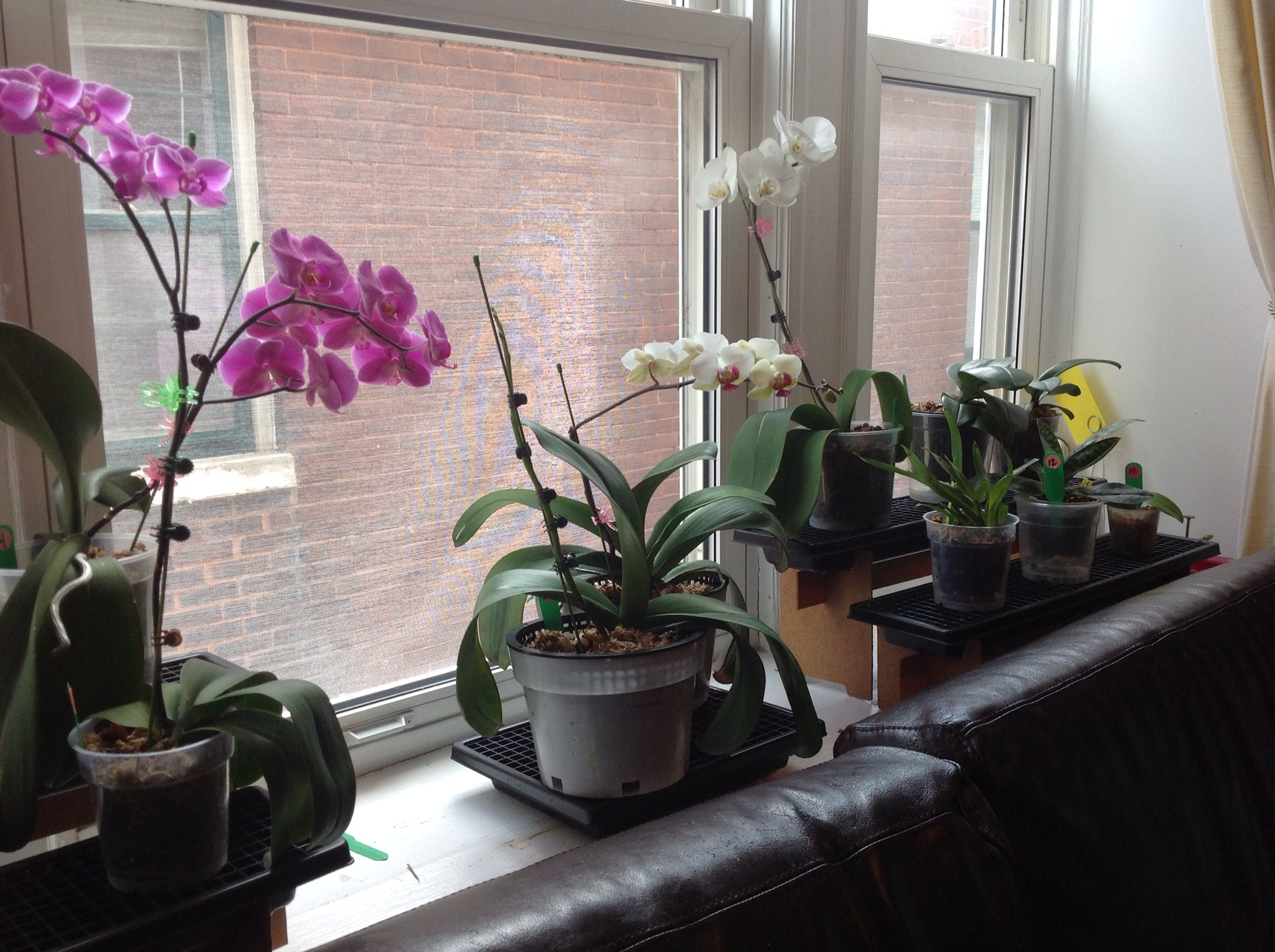 You Must Have Heard About Growing Plants And Flowers Under Fluorescent Light
