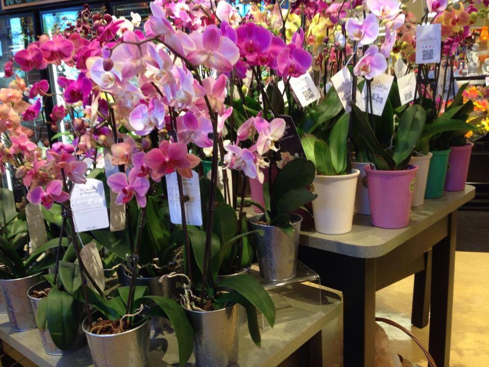 Welcome to Kelley's Korner Orchid Supplies. Kelley's Korner is proud to provide personalized people-oriented service for all your Orchid growing and horticultural needs. Kelley's Korner Orchid Supplies will be attending many great orchid shows and upcoming events.